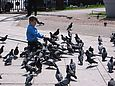 Hand-feed pigeons