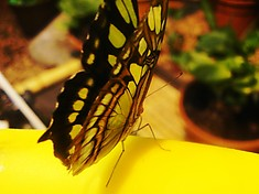 "The butterfly garden ""Mindo"""